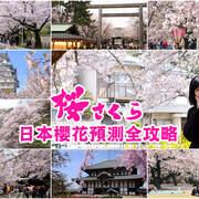 【2018日本櫻花前線預測】開花、滿開花況即時情報 (火熱更新中!!!)