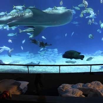 暢遊海底世界。與魚兒來個最親密接觸