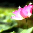 花壇聞法點 圖像