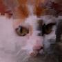 Retropycat