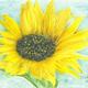創作者 擁抱太陽 的頭像
