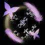 蝶羽舞雪月