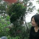 nancy wang 圖像