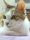 創作者 九尾妖貓 的頭像