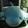kitedolphin