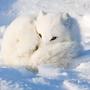 雪青狐愛分享