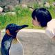 創作者 企鵝太太 的頭像