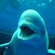 創作者 小白鯨 的頭像
