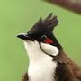 sparrow890