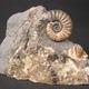 創作者 化石澄清 的頭像