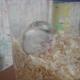 創作者 鼠寶樂園 的頭像